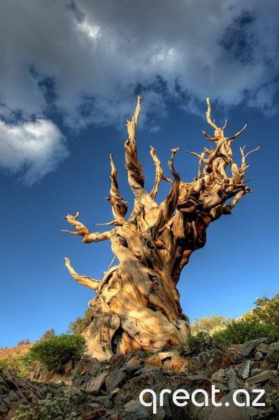 Qeyri-adi ağaclar (18 Foto)