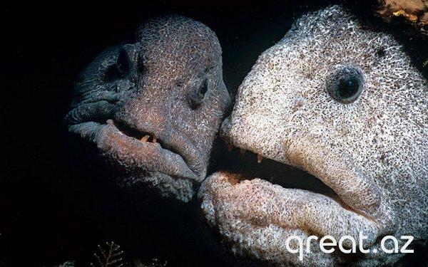 Ən qorxunc dəniz varlıqları (11 foto)