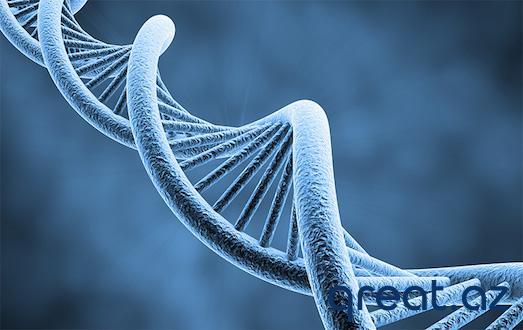 Genetik test nədir?