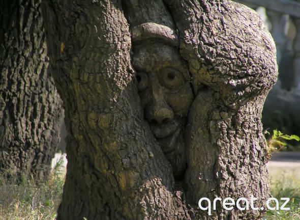 Haradan ağac üzrə döymək yarandı