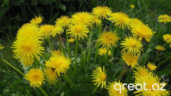 Bitkilər, hansılar ki, hava proqnozu verirlər